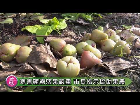韓國瑜赴六龜訪視寒害農損 關心農產外銷