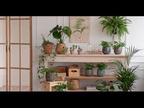 Crea un rincón con plantas de interior