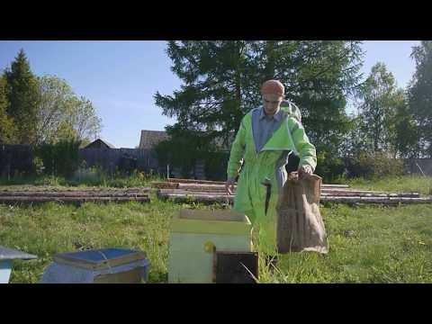 Чтобы рой не слетел. Как правильно посадить рой пчел. Пасека роение