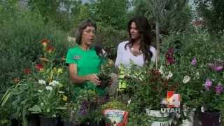 Planting In the Summer Salt lake City Utah