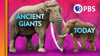 The Mystery of Earth's Disappearing Giants | IN OUR NATURE
