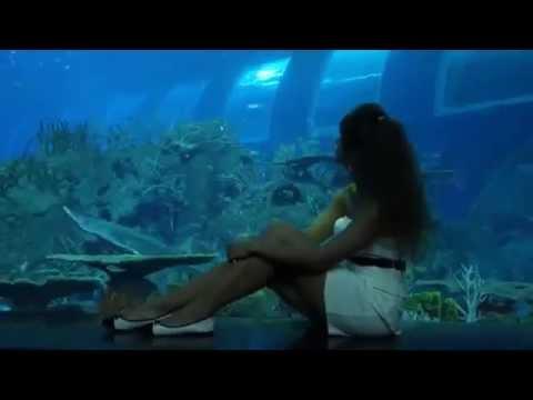 Самый большой аквариум в мире!