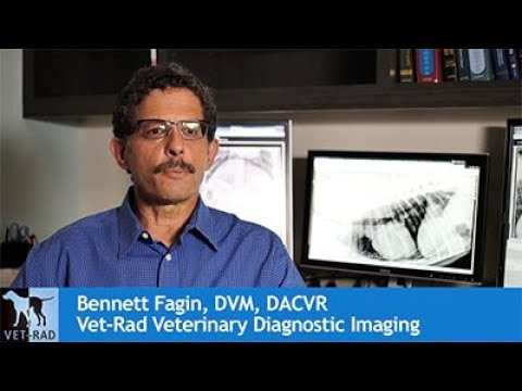 Video Sound Smart DR - The Intelligent Digital Radiography System from Sound