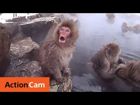 Snow Monkey in Hot Spa | Action Cam | Sony