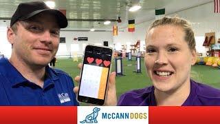 Dog Agility Puppy Training- Ken And Kayl Teach Agility Together