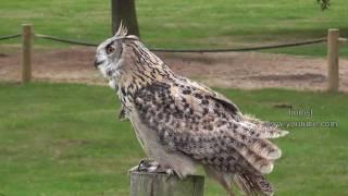 Owls And Eagles - Birds of Prey