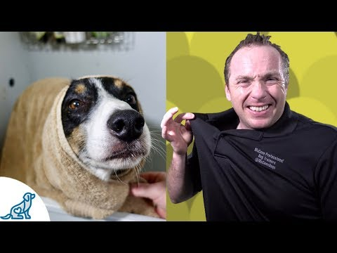 Bathing Your Dog- 2 Simple Hacks