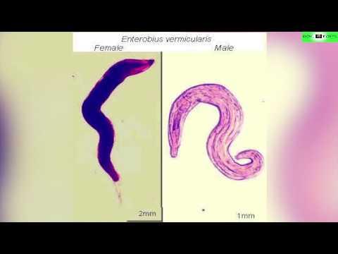 Las enfermedades cutáneas de los helmintos