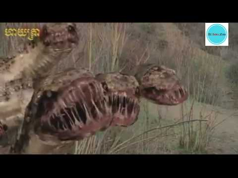 Download New 2018 Hollywood Movie Animals Big Anek Fight HD Mp4 3GP Video and MP3