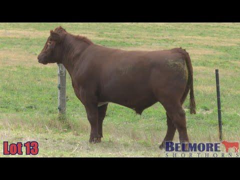 BELMORE OREGON Q115