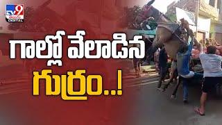 Viral Video : గాల్లో వేలాడిన గుర్రం..! మనిషి చేసే తప్పులు జంతువులకు ముప్పుగా పరిణమించాయి