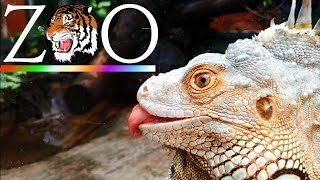Thăm sở thú Sài Gòn 2016 - Saigon Zoo