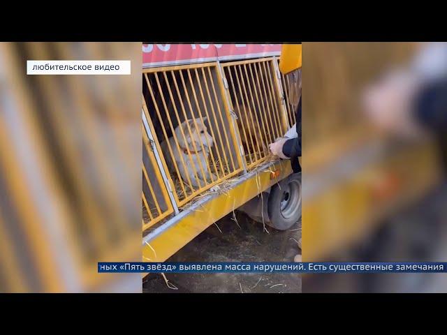 Фактов жестокого обращения с животными не зафиксировали
