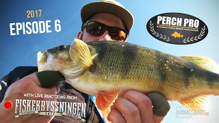 Perch Pro 2017 - Episode 6 (with Live Reactions from the Sportfishing Cruise) - Kanalgratis.se