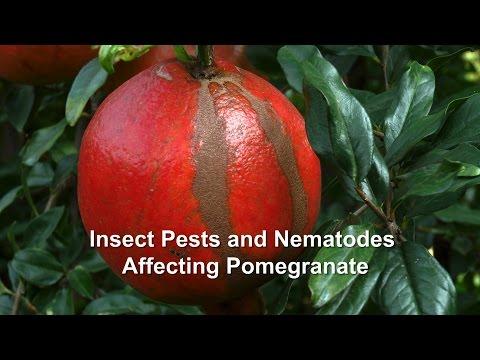 Purification mula sa parasites sa pamamagitan ng enemas