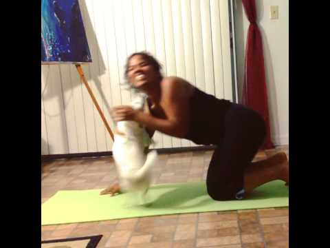 Yoga Ruined By Playful Dog