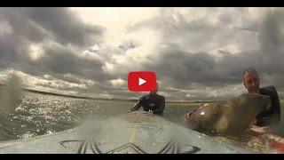Смотреть онлайн Морской котик катается на доске с людьми