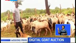 Goats auctioned online through App in The Annual Kitui Cultural Festival