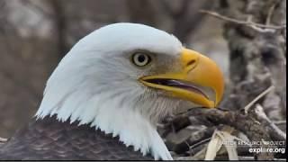 Decorah Eagles-Super Closeups of DM2_3.23.20
