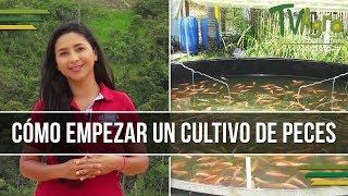 Como Empezar Un Cultivo De Peces - Piscicultura - TvAgro Por Juan Gonzalo Angel
