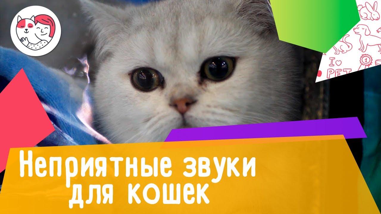 4 вида неприятных звуков, которые кошки терпеть не могут
