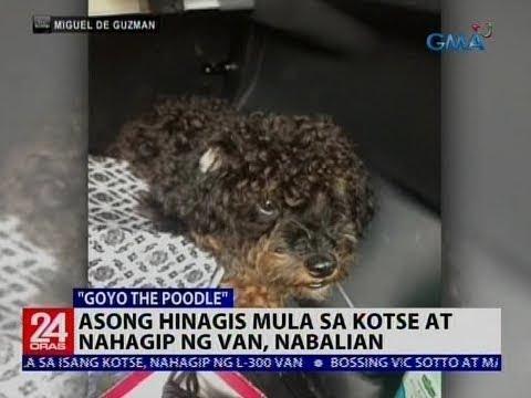 [GMA]  Asong hinagis mula sa kotse at nahagip ng van, nabalian