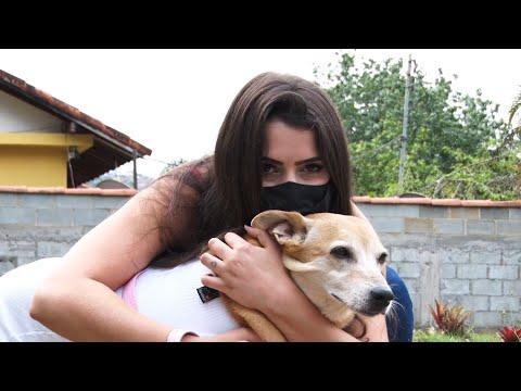 Outubro Rosa Pet: animais também podem ter câncer de mama e precisam de atenção