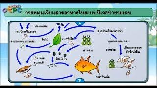 สื่อการเรียนการสอน ระบบนิเวศป่าชายเลน ม.3 วิทยาศาสตร์