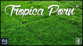 Nowości Tropica na Interzoo