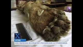 На Алтае обнаружено племя не известных науке человекоподобных монстров