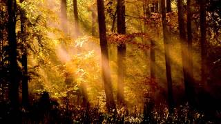 Angel Dreams - The Healing Song