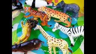 Learn Colors With Wild ZOO Animals Blue Water Toys For Kids