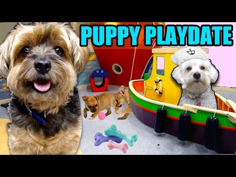 DOG LIFE HACKS & OTTER COMES OVER FOR A PLAY DATE!! Puppy Nap Time & Play Time With Friends