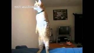 Смешная подборка видео про животных