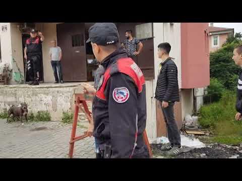 POLİS, PİTBULL HIRSIZLARINI KOVALADI