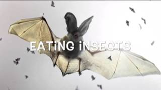 Endangered Gray Bats Report by Dallas 5th Grade MLS
