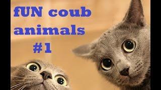 FUN coub animals #1 /Смешные ролики с животными ноябрь 2018