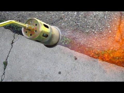 Quick & Easy Way To Eliminate Unwanted Weeds Using A Propane Torch
