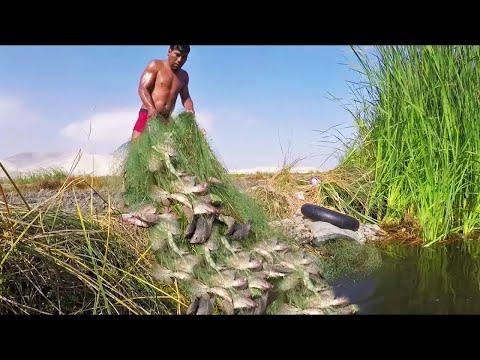 Mira lo que PESCO este HOMBRE en Lagunas PELIGROSAS   Pesca de #TILAPIAS GRANDES