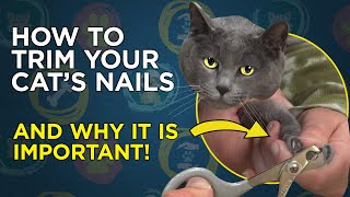 How To Trim Your Cat's Nails Video