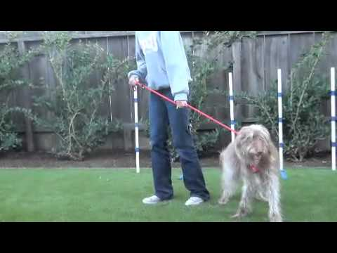 Loose Leash Walking: Using Movement to Guide the Dog