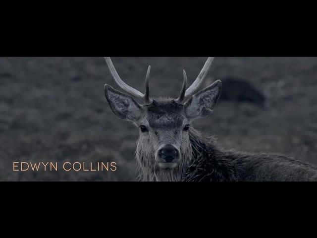 I'm Ok Jack  - Edwyn Collins