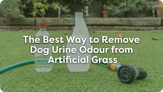 The Best Way To Remove Dog Urine Odour From Artificial Grass