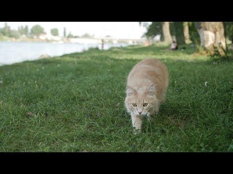 Kann man mit (Wohnungs-)Katzen spazieren gehen?