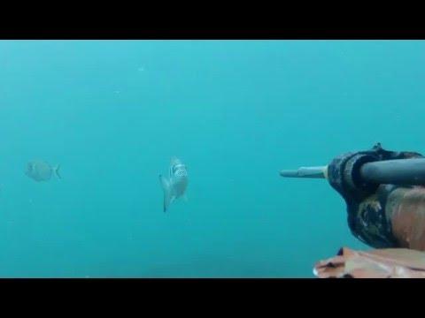 Pesca in giri di costo