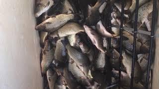 Три пескаря рыбалка краснодарский край