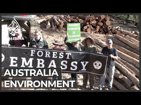 Forest fires, logging create big crisis in Australia