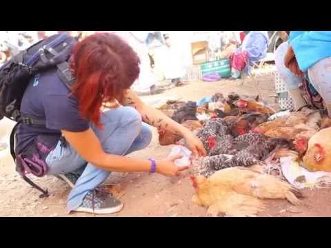 Animal Day at Mers El Kheir Animal Market, Morocco (2014)