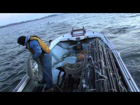 [Sea and Work] Hoshi Seaweed Shop (Part 3)