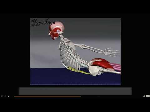 Анатомия йоги. Прогибы часть 3. Как правильно делать прогибы, чтоб не болела спина.